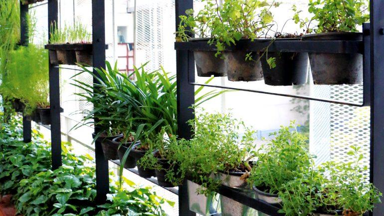D.I.Y. Vertical Gardens ปลูกผักแนวตั้ง