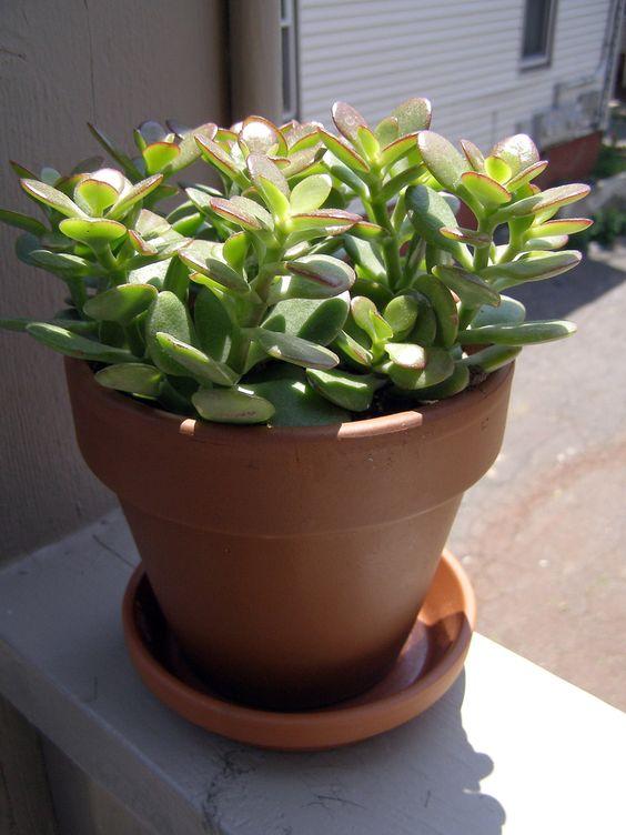www.gardeningknowhow.com