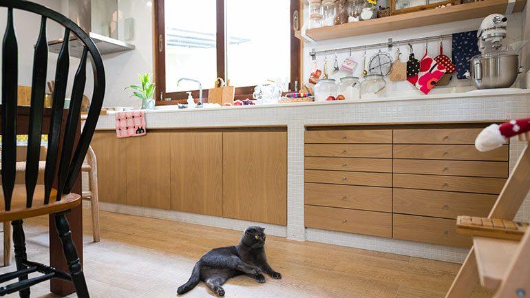รวม 4 วิธีจัดการเจ้าเหมียวตัวดีมาป้วนเปี้ยนบนเคาน์เตอร์ครัว